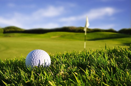 grama para campo de golf