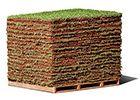 grama esmeralda em placas