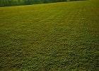 grama curitibana